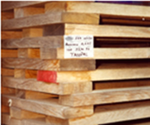 wood with quality for the manufacture of barrels